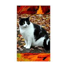 Tuxedo Cat Decal