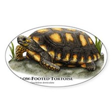 Yellow-Footed Tortoise Decal