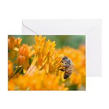 Wall Calendar-Bee and Pollinators Ca Greeting Card