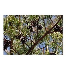pinecone_clutch Postcards (Package of 8)