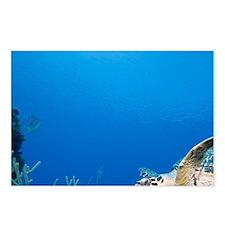 Underwater view of Hawksb Postcards (Package of 8)