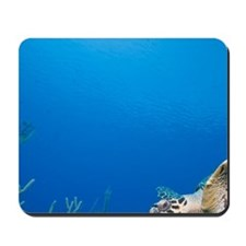 Underwater view of Hawksbill Turtle (Ere Mousepad