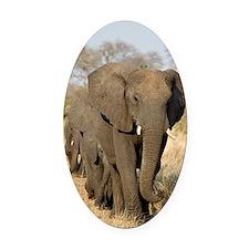 Elephants in a row Oval Car Magnet