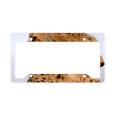 Cheetah Brothers License Plate Holder