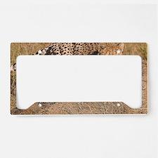 Cheetah cub License Plate Holder