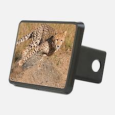 Cheetah cub Hitch Cover
