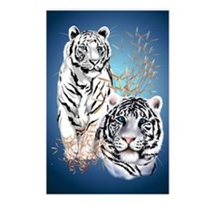 NookSleeve Two White Tige Postcards (Package of 8)