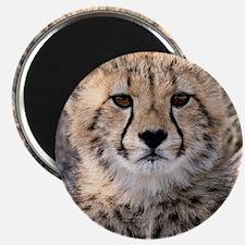 Cheetah Cub4-1large Magnet