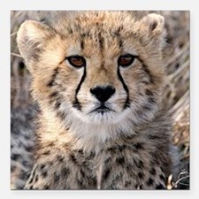 "Cheetah Cub4-1large Square Car Magnet 3"" x 3"""