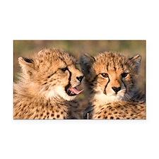Cheetah cubs2 large Rectangle Car Magnet