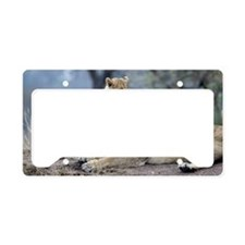 Sparta Cubs Playing License Plate Holder