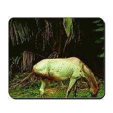 Caribbean, Southwest Puerto Rico, horse Mousepad