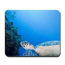 Underwater view of Hawksbill Turtle (Ere Mousepad