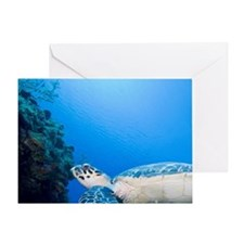 Underwater view of Hawksbill Turtle  Greeting Card