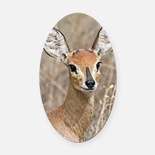 Steenbok Oval Car Magnet