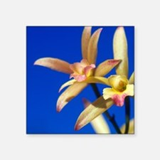 "Orchids, Caribbean. Square Sticker 3"" x 3"""