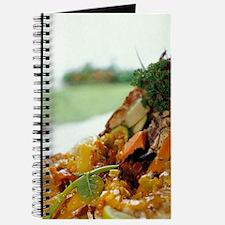Lucia, Lobster, Ti Kaye Resort, Anse Cocho Journal