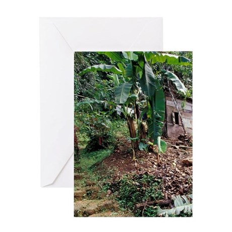 Caribbean, BWI, St. Lucia, Mill ruin Greeting Card