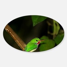 Puerto Rican Tody with food for you Decal