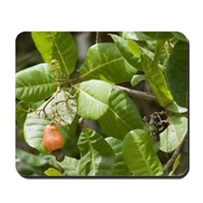 Caribbean - Trinidad - Cashew fruit with Mousepad