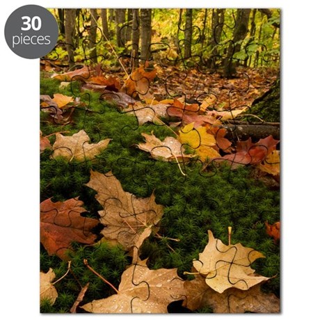 forestFloor_Kindle Puzzle