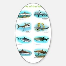 Sharks of the world Decal