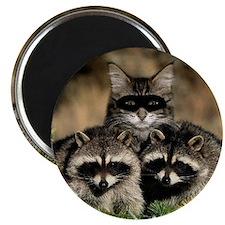 Raccoons Magnet