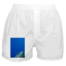 Underwater view of Hawksbill Turtle ( Boxer Shorts