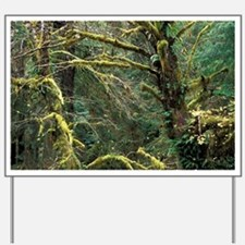 Queen Charlotte Islands. Nature Sceneott Yard Sign