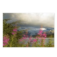 Epilobium angustifolium Postcards (Package of 8)