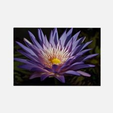 Purple Lotus Rectangle Magnet
