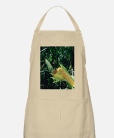 An ear of corn on the on the stalk. Apron