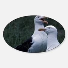 Great Black-backed seagulls Scotia, Decal
