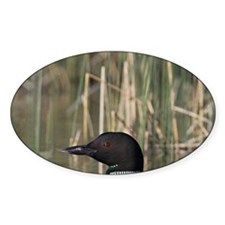 Lac Le Jeune. A family of Common Lo Decal