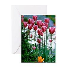 Butchart Gardens. Multi-colored tuli Greeting Card