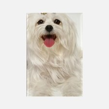 maltese pillow Rectangle Magnet