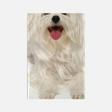 maltese itouch case Rectangle Magnet