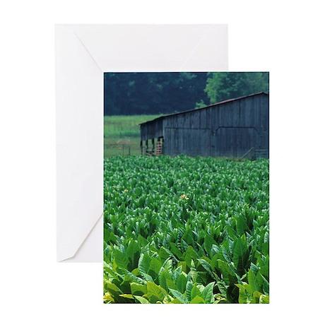 Tobacco farm. Greeting Card