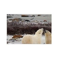 Polar Bears (Ursus maritimus) in  Rectangle Magnet