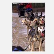 Dog sledding team near Ch Postcards (Package of 8)