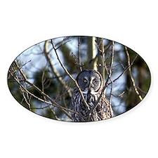 Great Gray Owl (Strix nebulosa) sit Decal