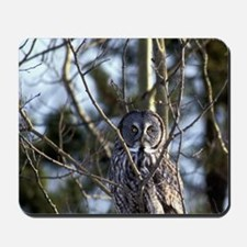 Great Gray Owl (Strix nebulosa) sits on  Mousepad