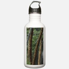 Madrona Trees (Arbutus Water Bottle