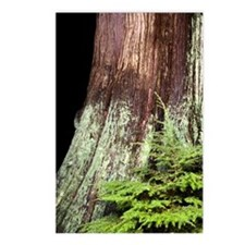 and western red cedar Postcards (Package of 8)