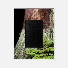 and western red cedar Picture Frame