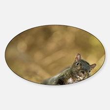 Eastern gray squirrel, Sciurus caro Sticker (Oval)