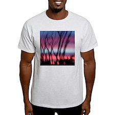 Ocotillo Sunset Dream T-Shirt