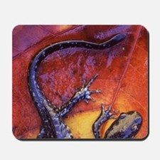 Quebec. Blue-spotted salamander on fall- Mousepad