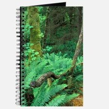 Woodchip path leads to gullyland, Comox Va Journal