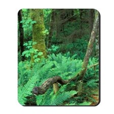 Woodchip path leads to gullyland, Comox  Mousepad